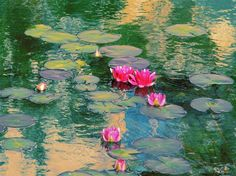 "This is a PHOTO, Not ""Lily pad painting by Monet - ""Google Search"