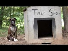Grab a kleenex and enjoy as Tiger runs in his new fenced backyard.  Way to go Coalition to Unchain Dogs!!