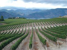 Benson Vineyards Estate Winery | Manson, Washington | Lake Chelan, Washington