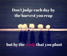 Don't judge each day by the harvest you reap but by the seeds that you plant. www.cutesolutions.be