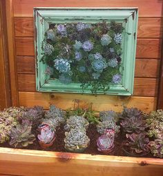 A succulent frame - Canadian Gardening Succulent Frame, Succulent Pots, Growing Succulents, Cacti And Succulents, Garden Projects, Garden Ideas, Do It Yourself Crafts, Outdoor Ideas, The Great Outdoors
