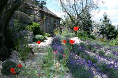 casual effect - lavender and poppies