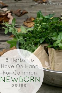 8 Herbs To Have On Hand For Common Newborn Issues from Growing Up Herbal