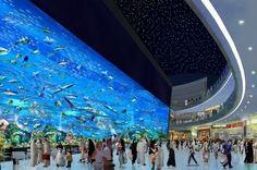 Dubai Aquarium, inside the famous Dubai Mall. To see them for yourself, book cheap flights to Dubai with Globehunters > http://www.globehunters.com/Flights/Dubai-Flights.htm