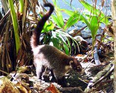 Flora y fauna tropical en Costa Rica