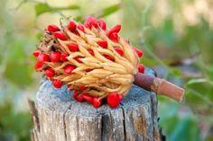 How to Grow a Magnolia Tree from Seeds   DoItYourself.com