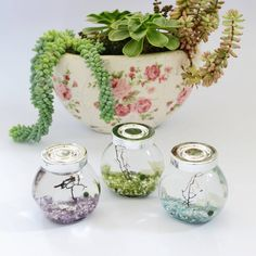 DingaDing Terrariums Marimo Moss Ball Terrarium ($14) ❤ liked on Polyvore featuring home, home decor, floral decor, ball jars and moss terrarium