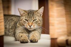 Why do cats knead? #catbehaviorkneading