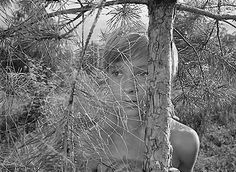 Ivan's Childhood, 1962,  by Andrei Tarkovsky. Иваново детство, фильм Андрея Тарковского.