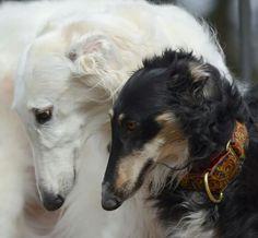 KiKi and Demi. Two sweet souls!