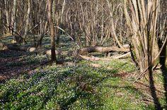 Noordenveld/ Westerkwartier (36km) http://wandelenrondroden.nl/megaroutes-20km/wandelroutes/langerdan20km/noordenveld-westerkwartier-ca-36km  Een afwisselende wandeling die langs verschillende landschappen in Drenthe en Groningen voert.U komt tevens langs een aantal interessante cultuur-historische punten. Lees de beschrijving op de website voor meer informatie. Deze lange wandeling is ook te lopen in twee delen van beide 17 kilometer.