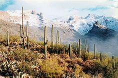 Catalina mountains, Arizona