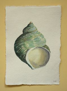 An original watercolour painting illustration of a turbo shell from my collection, a little treasure gathered at the oceans edge. Beach style coastal decor series by Lisa Le Quelenec at Seaside Studios UK. Kids Watercolor, Watercolor Cards, Watercolour Painting, Sea Life Art, Sea Art, Botanical Illustration, Artist At Work, Sea Shells, Original Artwork