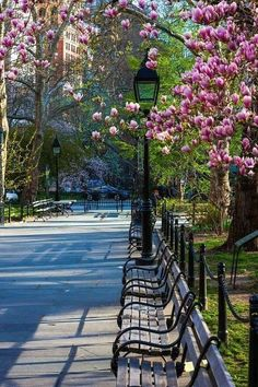 New York park with benches and magnolia flowers