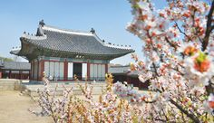 Munjeongjeon of Changgyeonggung Palace, a council hall where the king dealt with routine state affairs / Courtesy of the Cultural Heritage Administration