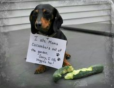 Doxie shaming                                                                                                                                                                                 More