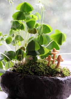 With just a few supplies, you can make a leprechaun-friendly garden that you'll want to keep on display even after St. Patrick's Day is over.