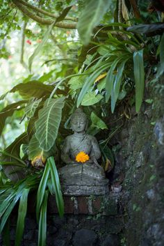 There are so many small details all around Oneworld Ayurveda. One of them is this lush covered Budha statue. Do you know where this is? #detox #ayurveda #ayurvedic #ayurvedicretreat #oneworldayurveda