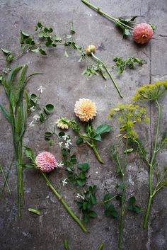 Behind the scenes with florist Amy Merrick | west elm