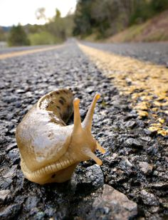 Robin Loznak Photography: Pacific banana slug, Oregon - there was a slug on my shoe a very good omen!