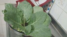 Salada Orgânica do meu Quintal