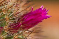 "https://flic.kr/p/uPf86S   Delicada entre pinchos   <a href=""http://jcfajardophotography.com/"" rel=""nofollow"">jcfajardophotography.com/</a>  Macro de plantas"