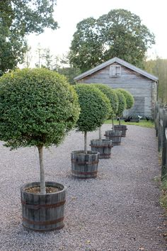 Topiary The House That Lars Built.: Gunillaberg, Sweden Part 1 - When I found out that floral designer/sculpture/magic maker Tage Andersen had a summer. Topiary Trees, Potted Trees, Boxwood Topiary, Landscape Design, Garden Design, Jardin Decor, Driveway Landscaping, Gravel Driveway, Country Landscaping