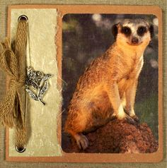 Vintage style photo of meerkat on Women's Greeting Card. Natural woven jute, silver butterfly flower charm, handmade cotton paperOOAK.