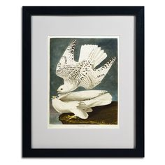 Iceland or Jer Falcon by John James Audubon Matted Framed Painting Print