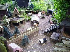 Plein de bonnes idées pour un parc extérieur à cochon d'inde! Et c'est très beau en plus! (J'aime trop le pot de grès à moitié enterré!)