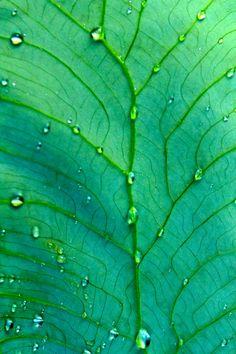 green :: tumblr_m1h6waKaLg1qevdxxo1_1280.jpg image by Kia31 - Photobucket