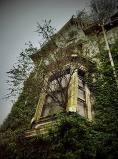 A tree grows out through the window of beautiful, abanded Danbert Hall, built in the 1880s for a tinplate manufacturer.