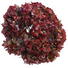 FiftyFlowers.com - Cranberry Antique Enhanced Hydrangea
