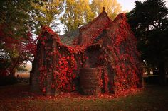 Abandoned church in autumn.  Love the red foliage!