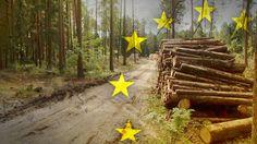 Wbrew temu, co mówili wizytujący we wtorek Polskę europosłowie, nie wstrzymano wycinki w Puszczy Białowieskiej. Owszem, harwestery nie pracowały przez jakiś czas, ale tylko dlatego, że mocno wiało. Dyrektor Lasów Państwowych rozwiał wszelkie wątpliwości.