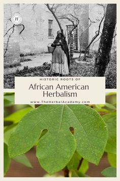 Roots of African American Herbalism: Herbal Use by Enslaved Africans | Herbal Academy | African American herbalism is a rich melange of many cultural traditions with deep origins rooted in African history dating back to ancient Egypt. Healing Herbs, Medicinal Plants, Natural Healing, Holistic Remedies, Herbal Remedies, Natural Medicine, Herbal Medicine, African Herbs, Edible Wild Plants