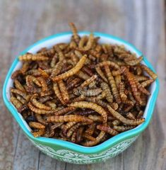 Mealworms -- LoveBugs For Hens (TM) High protein treat for backyard chickens Portable Chicken Coop, Best Chicken Coop, Building A Chicken Coop, Chicken Coops, Pet Chickens, Chickens Backyard, Raising Chickens, Backyard Poultry, Rabbits