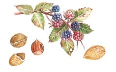 Autumn fruits for Caffarel