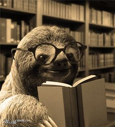 Sloths can read too? That makes them even cuter!