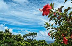 Zamamijima  #okinawa #japan