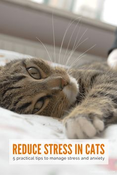 The symptoms of stress are many and varied; and range from the obvious, such as spraying, to the subtle, such as over-grooming | 5 Ways to Reduce Stress in Your Cat