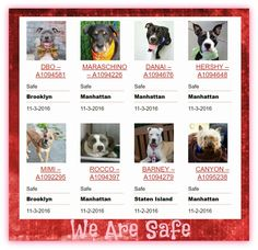 8 LIVES SAVED FROM NYCACC 10-2/3-16HAPPY TAILS PUPPY DOGS WE LOVE YOU