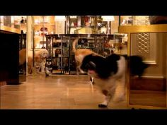 'Unleashed'. A Happy Holiday video from Bergdorf Goodman. Very cute...
