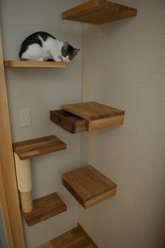 Cats love to climb on shelves and furniture. So it would be nice if you could find a corner where you could put up some shelves where your cat could sit and have fun. And while you do that you might as well take full advantage of that space and hide some drawers into the shelves. You can store your cat's toys in there or even valuables.: