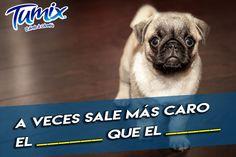 Complementa la frase  y dinos, ¿en qué ocasiones se utiliza? #SerFrescoEsSerColombiano Dogs, Animals, Frases, Faces, Animales, Animaux, Doggies, Animais, Dog
