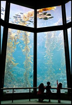 Monterey Bay Aquarium. Located on the Pacific Ocean Shoreline in Monterey, CA. They have live video fish cams