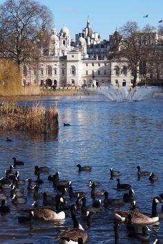 """Spazierengehen in und um den St. James Park in London - """"Fee ist mein Name"""""""