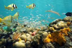 World's Top 10 Snorkeling Destinations