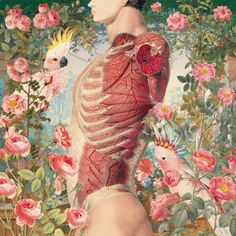 """Anatomic Collage from the """"Ciencias Naturales"""" serie by Juan Gatti."""
