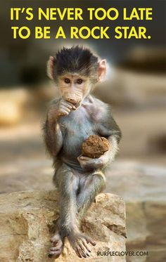 Here are some cute and adorable baby monkey pictures. All the old world monkeys are mainly found in India, Africa, Central to Southern Asia and Japan. But the new world monkeys are found in Mexico, Central and South America. Monkey Pictures, Funny Animal Pictures, Baby Pictures, Funny Photos, Cute Funny Animals, Cute Baby Animals, Funny Monkeys, Nature Animals, Animals And Pets